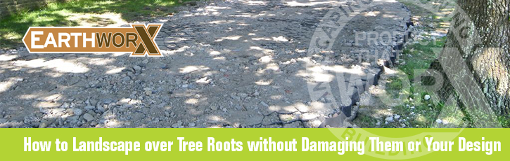 How to landscape over tree roots without damaging them or your design