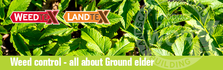 Weed control – all about ground elder